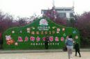 湖南桂阳三千亩樱花园受热捧 成为乡村旅游龙头