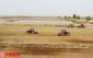 盐碱荒滩变身稻米粮仓 中植同惠于田稻花香里振兴乡村